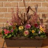 『アワユキエリカとバラ咲きジュリアンで春のようなコンテナガーデンにデザインしました。』の画像
