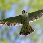 最近割とガチのマジで鳥に憧れてるんだけどどうしたらいい?