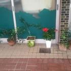『(´-ω-`)小豆島四品種』の画像
