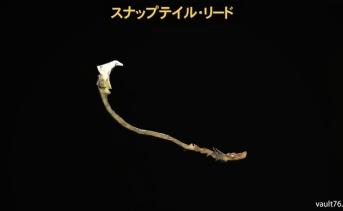 スナップテイル・リード(Snaptail reed)