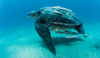 【閲覧注意】海洋生物最強ランキングBEST15が遂に発表!?→1位はやっぱりあの生物www