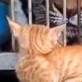 子ネコはびびって逃げちゃうかな? 檻の向こうにデッカイ猫がいた → こうなった…