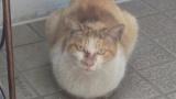 ガリガリの野良猫を保護した結果(※画像あり)