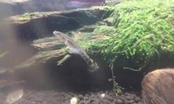 ハゼ系だとは思うんだけど、誰かこの魚の種類分かる人居る?