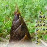 『嚢中の錐』の画像
