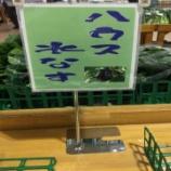 『泉州水ナス旬(28)/水なす美人塾』の画像