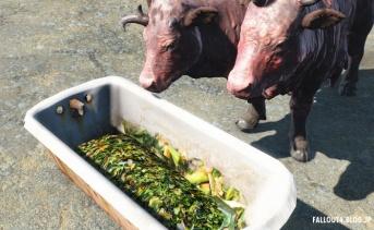 Brahmin and Trade Caravan Post Feed