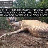 『アマゾンのジャングルにザトウクジラ』の画像