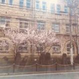 『春めき』の画像