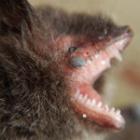 『顔の寄生虫』の画像