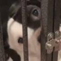 イヌが「ケージ」の中にいた。私を閉じ込めることは不可能だよ♪ → 賢い犬はこうします…