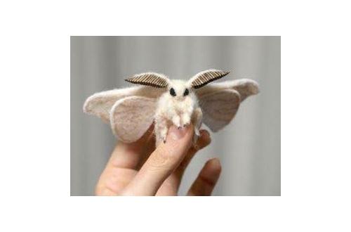 【画像】蚕の成虫、可愛いンゴwwwwwwwwwwwwwwwwwwwのサムネイル画像