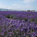 『【北海道ひとり旅】上川の旅『ファーム富田イースト』ラベンダーオンリーの静かな農場』の画像