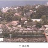 『小田原城 桜開花情報』の画像