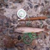 家族旅行の合間をぬった釣りのサムネイル