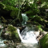 2008年の釣り 5月27日(火) 草津の沢、六合村の沢と山菜採りとグルメと温泉「長英の隠れ湯」の写真