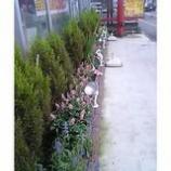 『所沢店の花壇』の画像