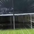 イヌがトランポリンで遊んでいた。今日はもう一つ、楽しいモノがあるぞ♪ → 犬は庭でこうなります…