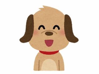 【画像】チワワ初の警察犬、顔つきがとても良いwwww