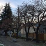 『開業前の医院見学と別府の桜』の画像