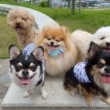 『公園集結☆午後はドッグマッサージTALK会☆』の画像