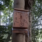 『春の巣箱チェック』の画像