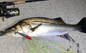 †Liberty Fishing Society†