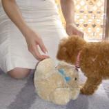 『ペット葬で心の整理(1)安宅グループ「ペットやすらぎの郷」にお世話になる』の画像