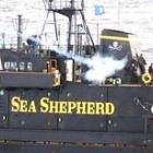 『海のテロ団体?それとも保護団体?』の画像