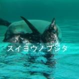 『【いつの間にか】水曜日の藤田』の画像