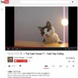 『The Cats' House 7 の第一弾Movie 出来ました。』の画像