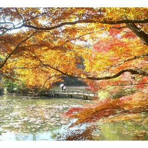 娘 神戸森林植物園に紅葉を見に行く