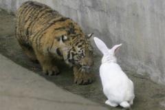 【画像あり】絶体絶命のウサギ、背中で語る