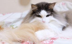 同居犬の毛繕いをして怒られる猫