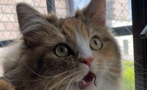 猫鍋 diary ~ラガマフィンのなぎと暮らす毎日~