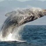『クジラとイルカはいつ地球に現れたのか』の画像