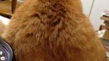 【画像あり】うちの猫がおかしい