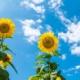 空よひらけ、夏へ向かって~Fine day