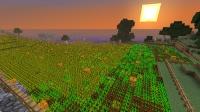 大小麦畑の夢、叶えます (11)