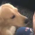 【イヌ】 ママが赤ちゃんを連れて帰ってきた。犬はどうなるの? → こうなります…