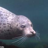 『一休さんの遺言と日本海を泳ぐ盲目のゴマフアザラシ』の画像