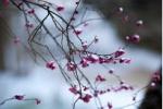 交野の春に順番待ちの花芽吹く~交野さんぽ⑯~