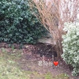 『さっそくお庭仕事』の画像