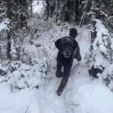【画像】犬にしか見えない画像が発見されるwwwwwwwwwwww