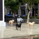 『近所で見かけた変な動物達』の画像