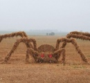 【ベラルーシ】8メートルの超巨大なワラグモが出現