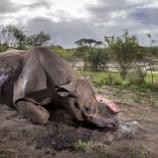 『野生動物写真家コンテストから』の画像