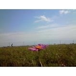 『花一輪』の画像