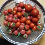 『農園4』の画像