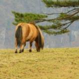 『【事前分析】中山牝馬S〈2018〉~フロンテアクイーン・マキシマムドパリ・トーセンビクトリーなどの評価は?~vol.968』の画像